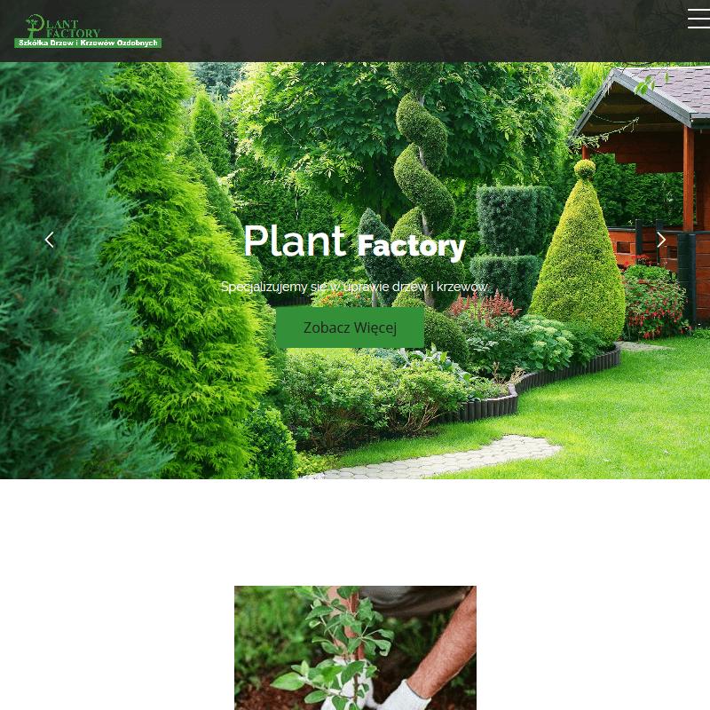 Ogrodowe sadzonki klonu palmowego